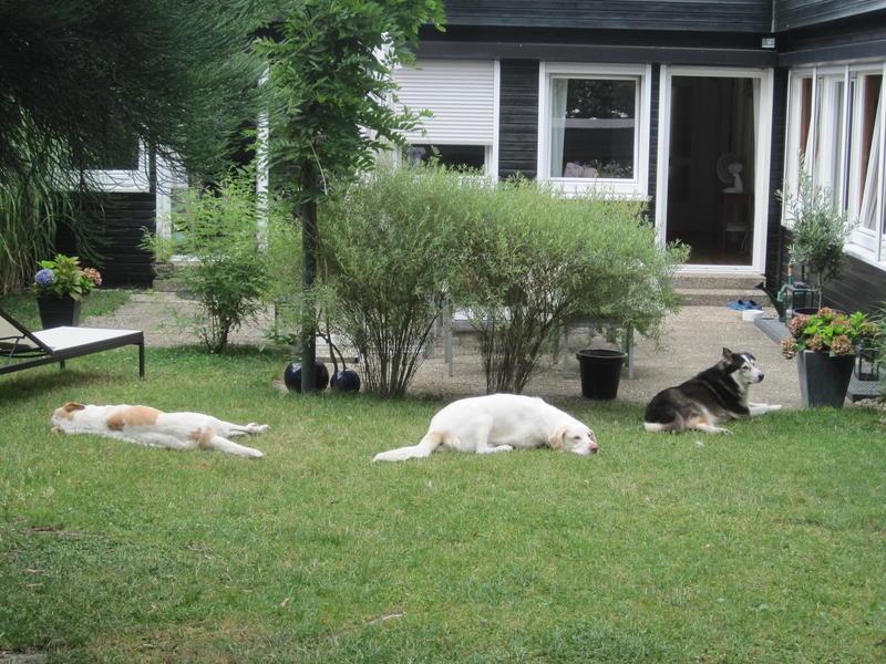 Bildertagebuch - EWALD (nun Jonne), besonderer Hund sucht besondere Menschen...VERMITTELT! 22584618vd