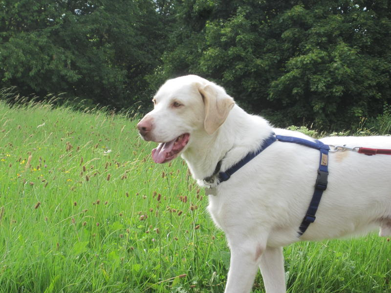 Bildertagebuch - EWALD (nun Jonne), besonderer Hund sucht besondere Menschen...VERMITTELT! 22584619ua
