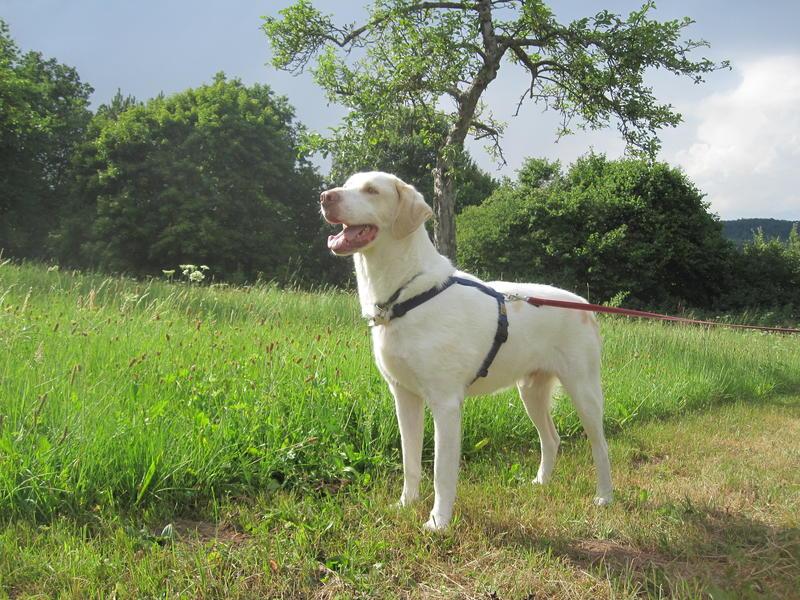 Bildertagebuch - EWALD (nun Jonne), besonderer Hund sucht besondere Menschen...VERMITTELT! 22584621tl