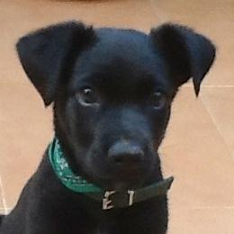Bildertagebuch - Marley, ein süßes verspieltes Hundekind möchte noch viel lernen ... hat in Spanien sein ZUHAUSE gefunden! 22627444ui