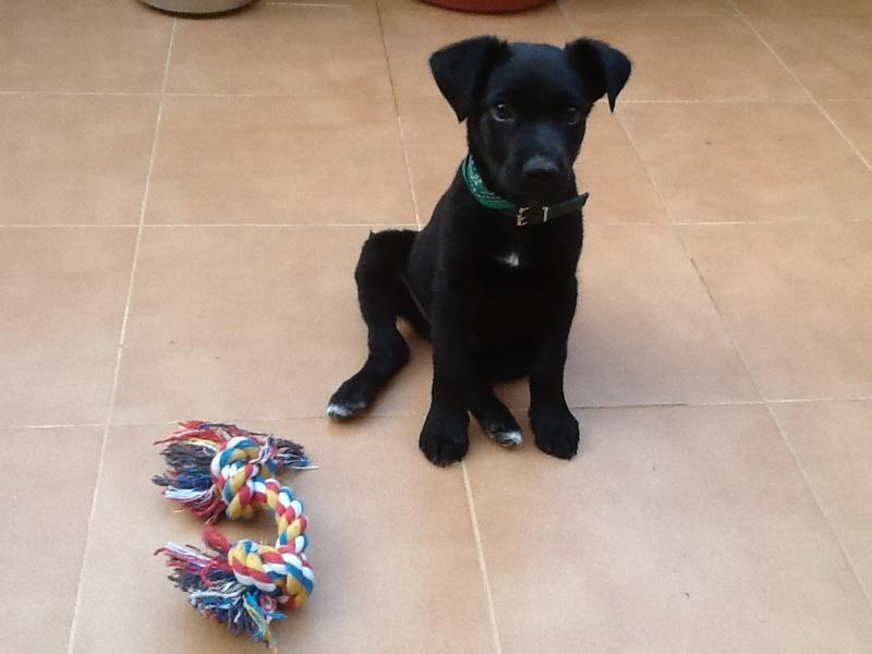 Bildertagebuch - Marley, ein süßes verspieltes Hundekind möchte noch viel lernen ... hat in Spanien sein ZUHAUSE gefunden! 22627447or