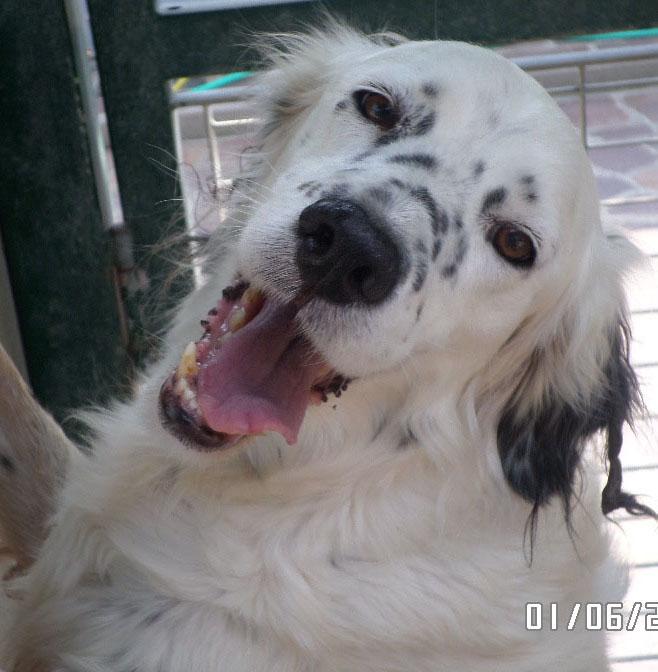 Bildertagebuch - Sissi, die Maus ist eine echte Schönheit und der perfekte Familienhund ... -- VERMITTELT -- 22627805wo