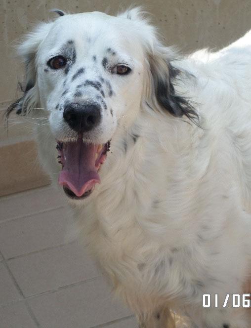Bildertagebuch - Sissi, die Maus ist eine echte Schönheit und der perfekte Familienhund ... -- VERMITTELT -- 22627812ms