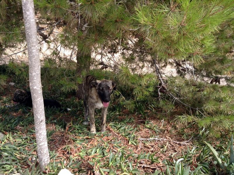 Bildertagebuch - Timber, ein ganz süßes Hundemädchen kommt aus ihrem Schneckenhaus raus und fängt an ihr Leben zu genießen ...ZUHAUSE IN SPANIEN GEFUNDEN! 22741170hj