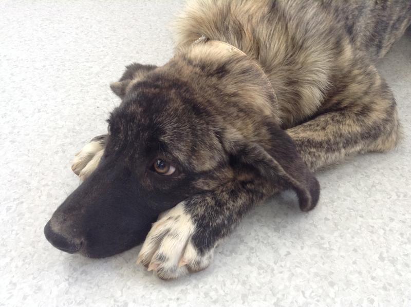 Bildertagebuch - Timber, ein ganz süßes Hundemädchen kommt aus ihrem Schneckenhaus raus und fängt an ihr Leben zu genießen ...ZUHAUSE IN SPANIEN GEFUNDEN! 22741171gp