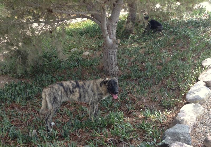 Bildertagebuch - Timber, ein ganz süßes Hundemädchen kommt aus ihrem Schneckenhaus raus und fängt an ihr Leben zu genießen ...ZUHAUSE IN SPANIEN GEFUNDEN! 22741176is
