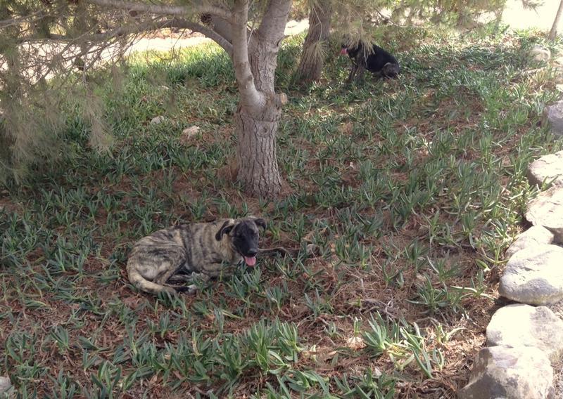 Bildertagebuch - Timber, ein ganz süßes Hundemädchen kommt aus ihrem Schneckenhaus raus und fängt an ihr Leben zu genießen ...ZUHAUSE IN SPANIEN GEFUNDEN! 22741177sw