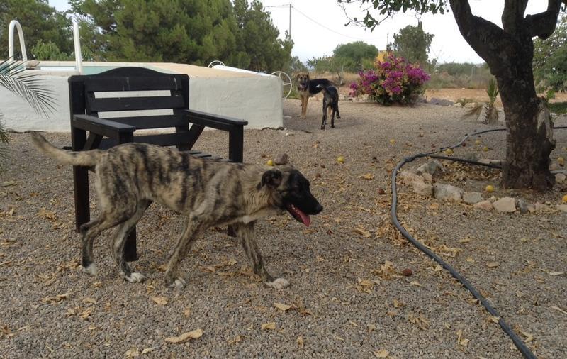 Bildertagebuch - Timber, ein ganz süßes Hundemädchen kommt aus ihrem Schneckenhaus raus und fängt an ihr Leben zu genießen ...ZUHAUSE IN SPANIEN GEFUNDEN! 22741179am