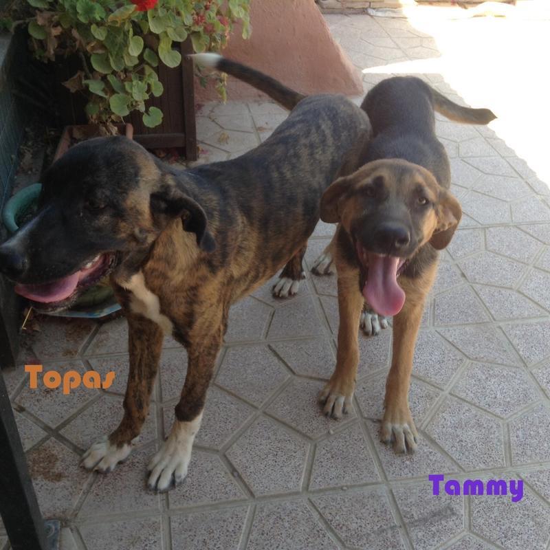 Bildertagebuch - Tammy, reizendes und cooles Welpenmädchen ... will ein großes Mädchen werden 22741451sz