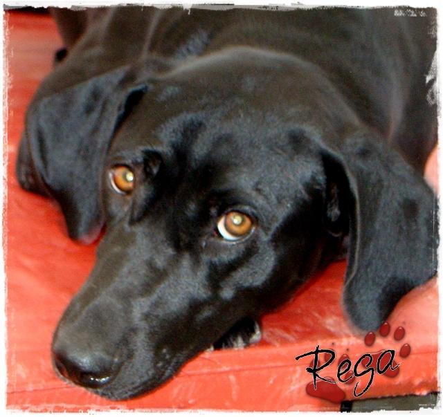 Bildertagebuch - Rega, die Maus war sehr unterernährt ... über ANDERE ORGA ZUHAUSE gefunden! 22950883cm