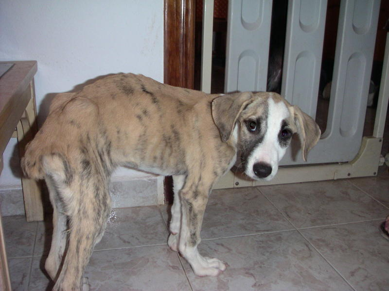 Bildertagebuch - Fabia, abgemagertes kleines Hundemädchen sollte getötet werden ... die arme Maus hatte großes Glück!- hat in SPANIEN IHR ZUHAUSE GEFUNDEN! 22951247oy