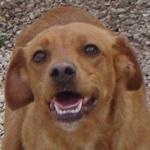 Bildertagebuch - Gabi, quirlige und agile süße Schnecke die am liebsten spielt ... in Spanien ein ZUHAUSE GEFUNDEN! 22951463jn