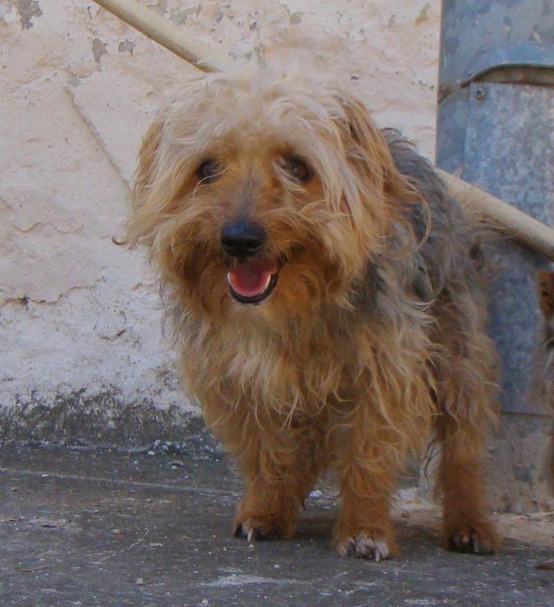 Bildertagebuch - Nolo, kleiner niedlicher Yorki sucht schnell eine Familie ... er möchte nicht mehr eingesperrt sein - Hat in Spanien sein ZUHAUSE GEFUNDEN!!! 22979526cw