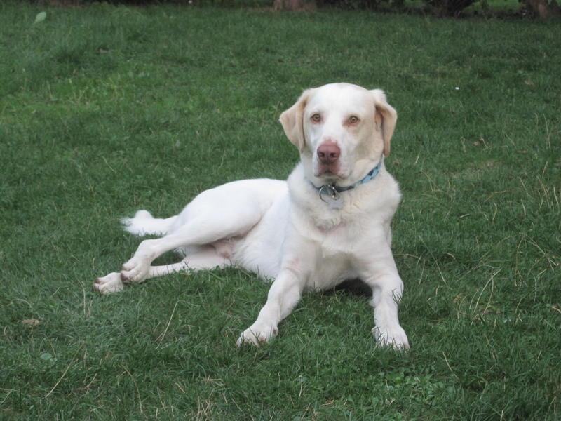 Bildertagebuch - EWALD (nun Jonne), besonderer Hund sucht besondere Menschen...VERMITTELT! 23038771nd