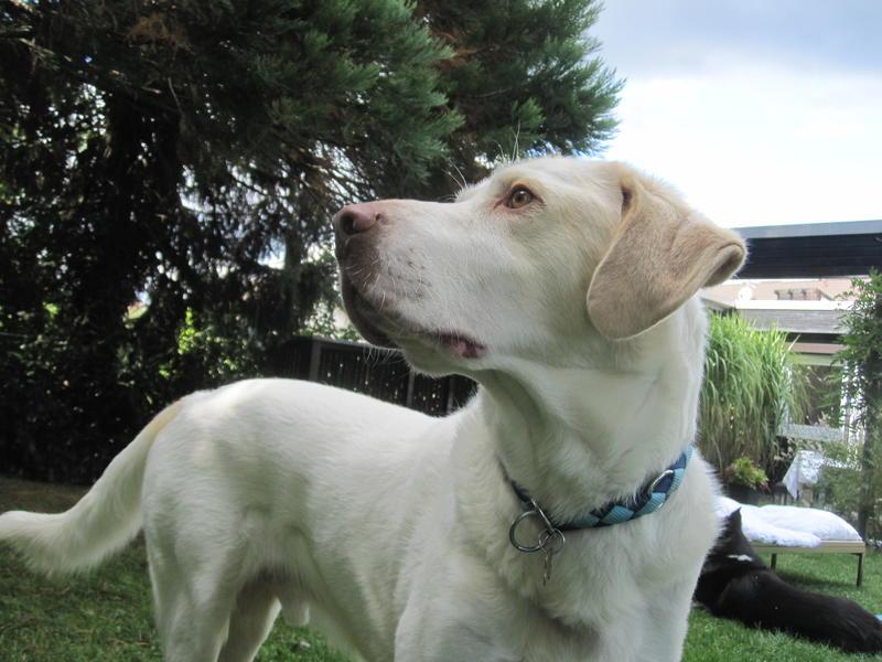 Bildertagebuch - EWALD (nun Jonne), besonderer Hund sucht besondere Menschen...VERMITTELT! 23038773nq