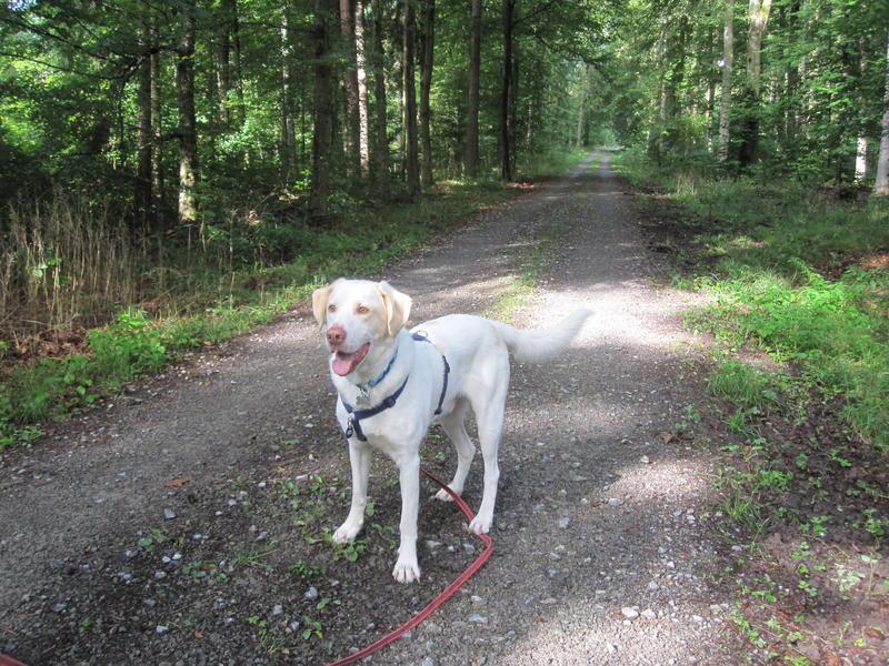 Bildertagebuch - EWALD (nun Jonne), besonderer Hund sucht besondere Menschen...VERMITTELT! 23038776jr