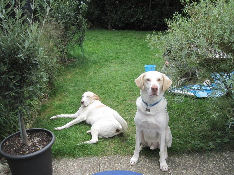 Bildertagebuch - EWALD (nun Jonne), besonderer Hund sucht besondere Menschen...VERMITTELT! 23038778ji