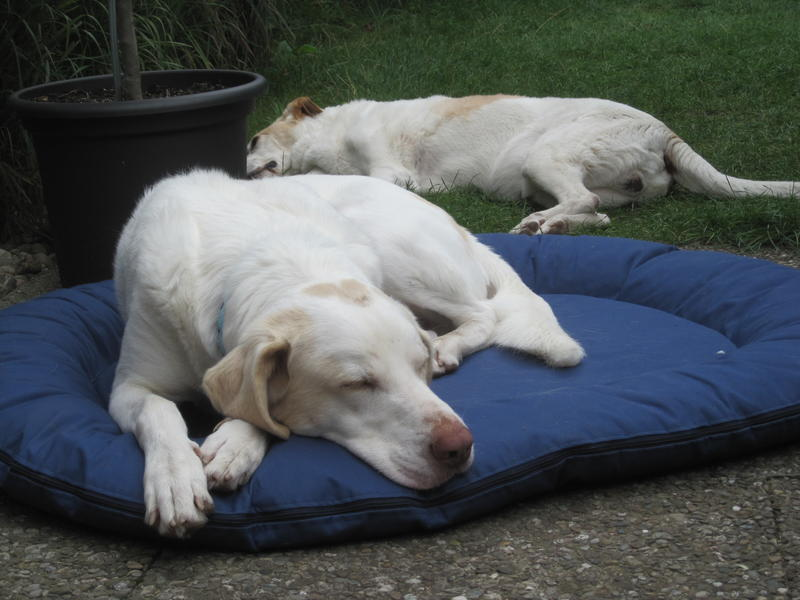 Bildertagebuch - EWALD (nun Jonne), besonderer Hund sucht besondere Menschen...VERMITTELT! 23038779rr