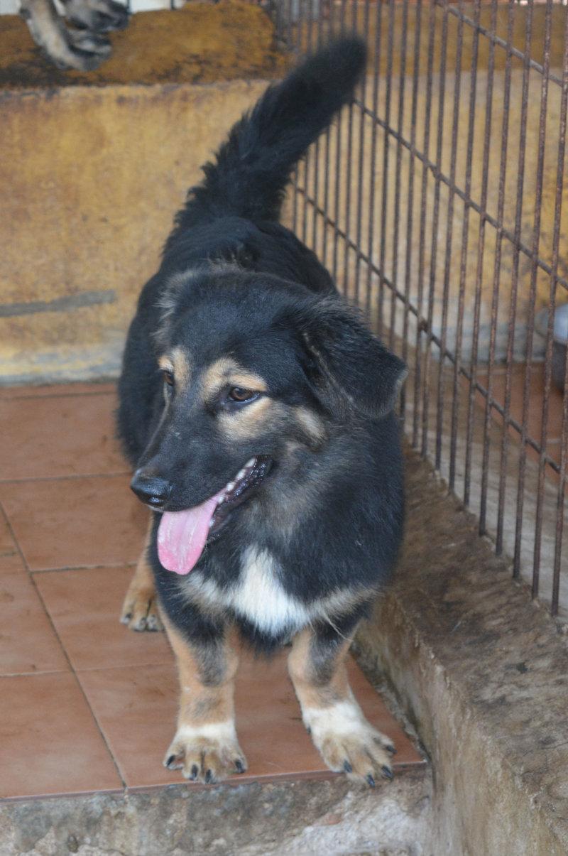 Bildertagebuch - Athos, zuckersüße kleine Schmollschnute ... wünscht sich schnell eine liebevolle Familie - in Spanien ZUHAUSE GEFUNDEN! 23059410mo