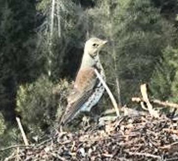 Estonian Osprey Nest ~Irma & Joosep~ (I&I)DOCUMENTATION 2015 - Page 22 23167795ex