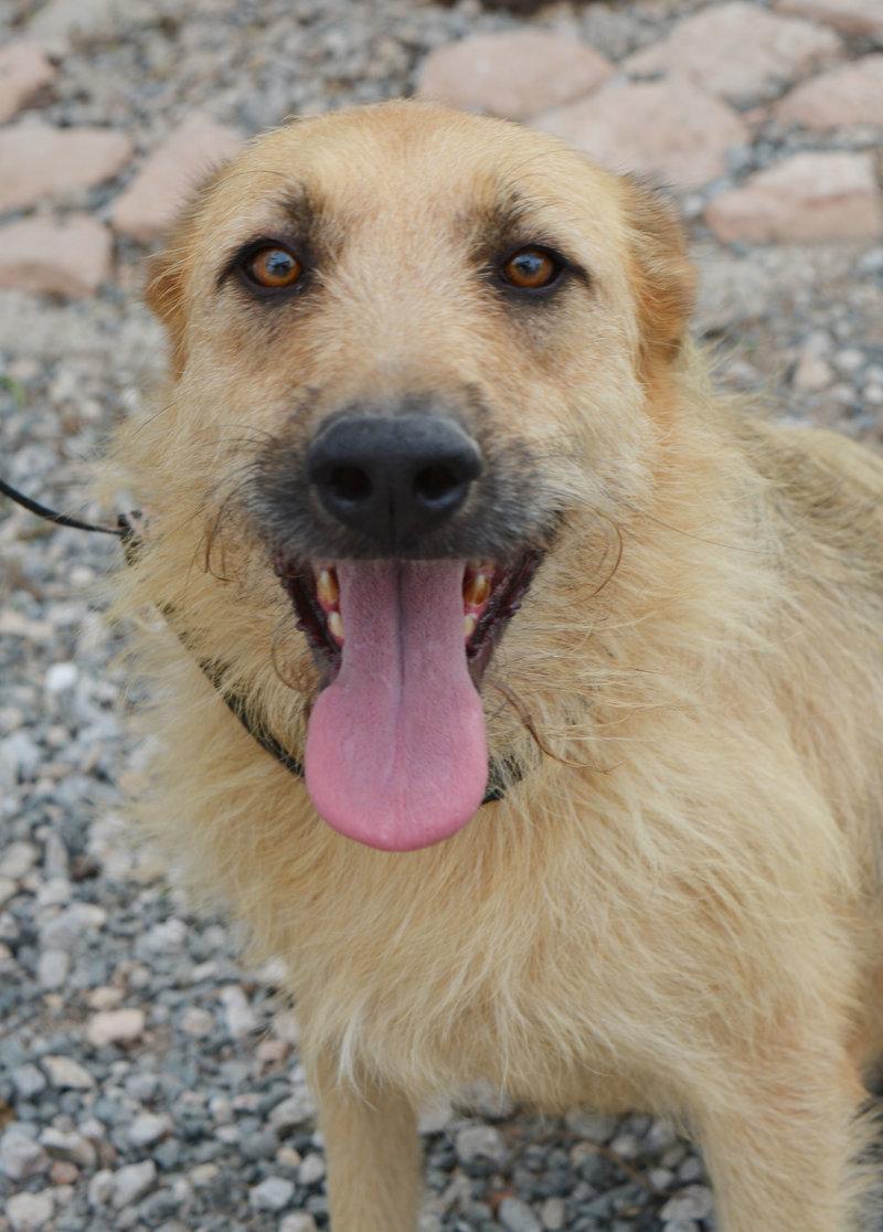 Bildertagebuch - Bartel : Kinderfreundlicher Traumhund sucht seine Familie! Hat sein ZUHAUSE in SPANIEN gefunden!!! 23331027sx