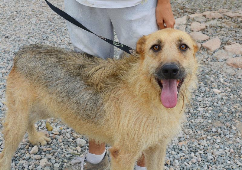 Bildertagebuch - Bartel : Kinderfreundlicher Traumhund sucht seine Familie! Hat sein ZUHAUSE in SPANIEN gefunden!!! 23331029qt