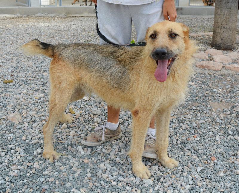 Bildertagebuch - Bartel : Kinderfreundlicher Traumhund sucht seine Familie! Hat sein ZUHAUSE in SPANIEN gefunden!!! 23331030kn