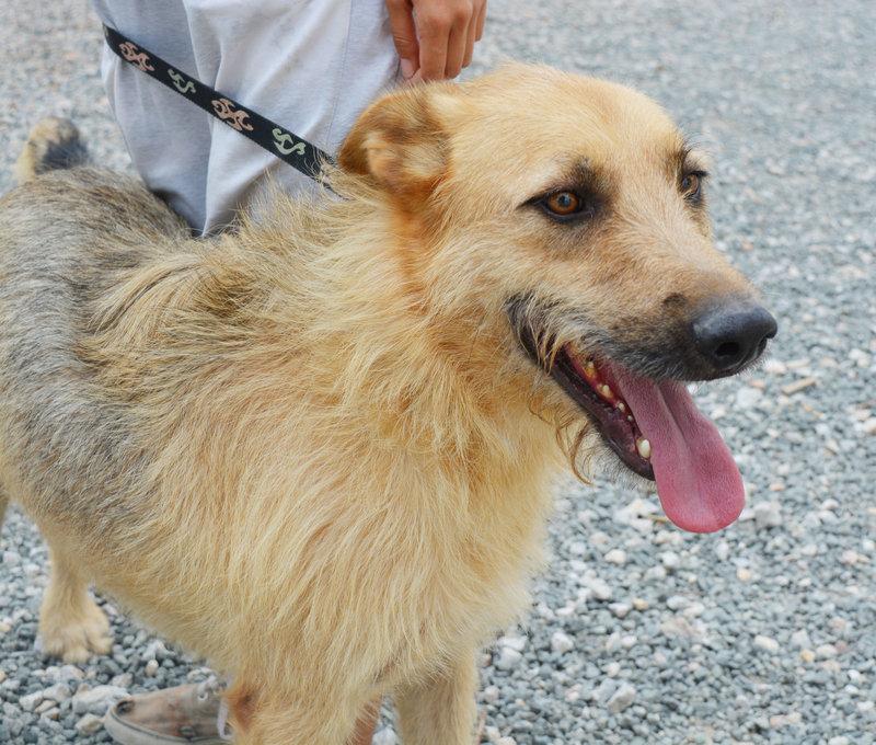 Bildertagebuch - Bartel : Kinderfreundlicher Traumhund sucht seine Familie! Hat sein ZUHAUSE in SPANIEN gefunden!!! 23331033gn