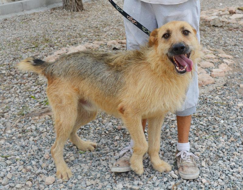 Bildertagebuch - Bartel : Kinderfreundlicher Traumhund sucht seine Familie! Hat sein ZUHAUSE in SPANIEN gefunden!!! 23331034nn