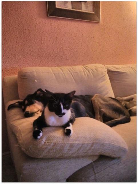 Bildertagebuch - Atenea, niedliche Welpenmaus... hatte keinen schönen Start ins Leben - hat in SPANIEN ihr ZUHAUSE GEFUNDEN! 23387597xm