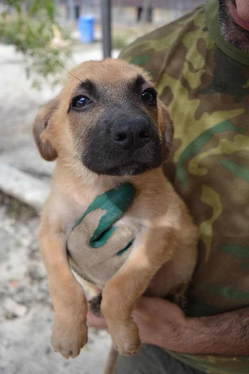 Bildertagebuch - Ginger, süße kleine Welpenmaus... möchte eine Chance auf ein Leben bekommen - in Spanien ZUHAUSE GEFUNDEN! 23397162zq
