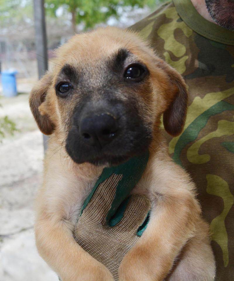 Bildertagebuch - Ginger, süße kleine Welpenmaus... möchte eine Chance auf ein Leben bekommen - in Spanien ZUHAUSE GEFUNDEN! 23397163ti