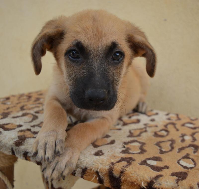 Bildertagebuch - Ginger, süße kleine Welpenmaus... möchte eine Chance auf ein Leben bekommen - in Spanien ZUHAUSE GEFUNDEN! 23397166nb
