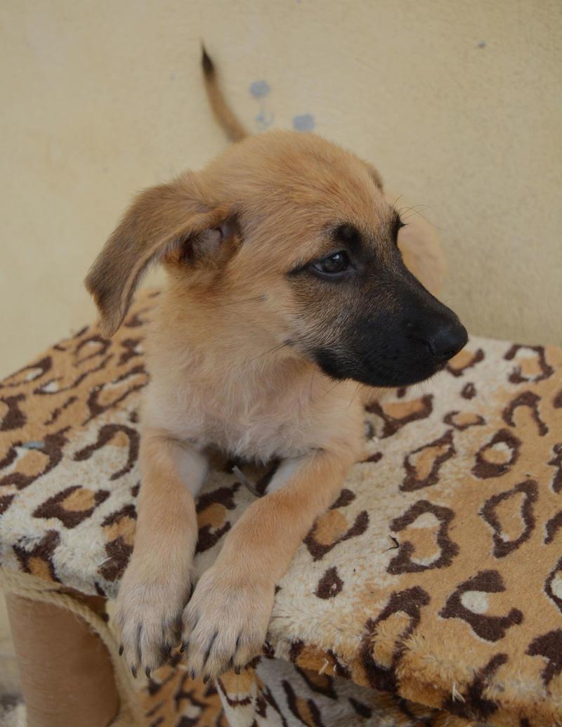 Bildertagebuch - Ginger, süße kleine Welpenmaus... möchte eine Chance auf ein Leben bekommen - in Spanien ZUHAUSE GEFUNDEN! 23397168kv