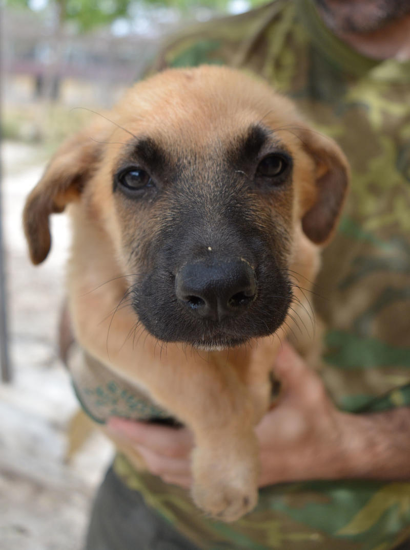 Bildertagebuch - Ginger, süße kleine Welpenmaus... möchte eine Chance auf ein Leben bekommen - in Spanien ZUHAUSE GEFUNDEN! 23397169oe