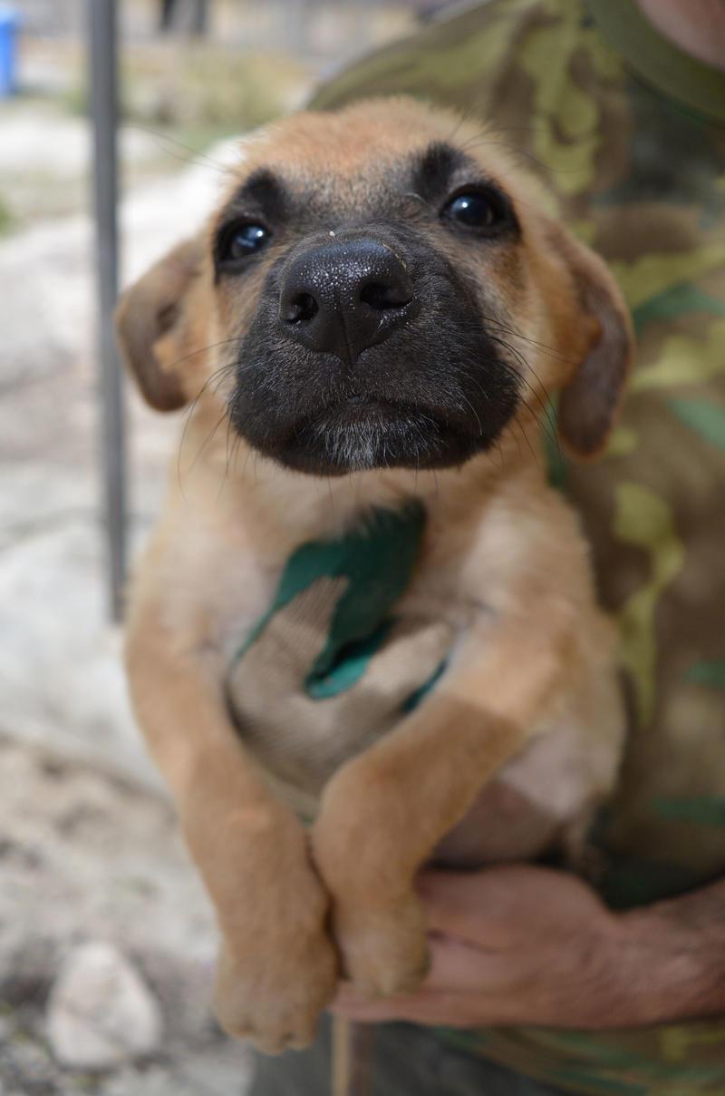 Bildertagebuch - Ginger, süße kleine Welpenmaus... möchte eine Chance auf ein Leben bekommen - in Spanien ZUHAUSE GEFUNDEN! 23397171ni