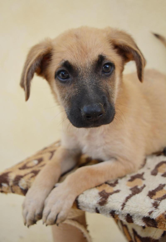 Bildertagebuch - Ginger, süße kleine Welpenmaus... möchte eine Chance auf ein Leben bekommen - in Spanien ZUHAUSE GEFUNDEN! 23397172qi