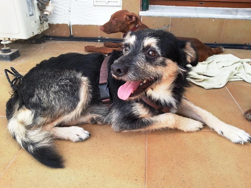 Bildertagebuch - Nepomuk, der verschmuste, braun-schwarzer Terrier Mischling...in Spanien sein ZUHAUSE GEFUNDEN! 23414160lg