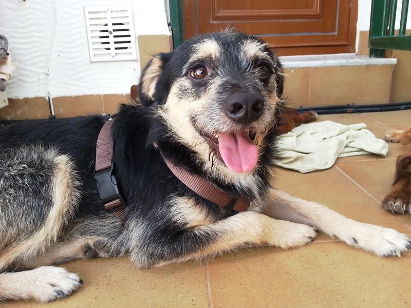 Bildertagebuch - Nepomuk, der verschmuste, braun-schwarzer Terrier Mischling...in Spanien sein ZUHAUSE GEFUNDEN! 23414164kn
