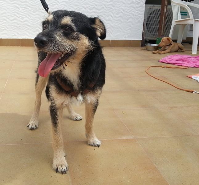 Bildertagebuch - Nepomuk, der verschmuste, braun-schwarzer Terrier Mischling...in Spanien sein ZUHAUSE GEFUNDEN! 23414215dc