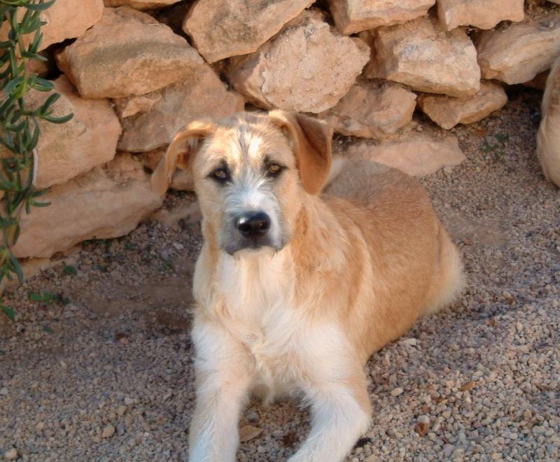 Bildertagebuch - Gemma, kleines Hundemädchen mit großen Pfoten sucht Kuschelplatz auf Lebenszeit - VERMITTELT - 23431526fz
