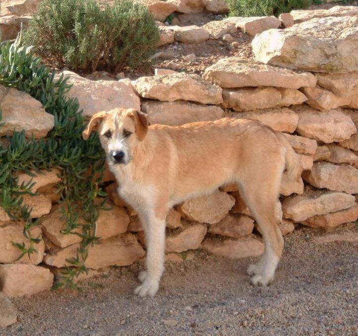 Bildertagebuch - Gemma, kleines Hundemädchen mit großen Pfoten sucht Kuschelplatz auf Lebenszeit - VERMITTELT - 23431530su
