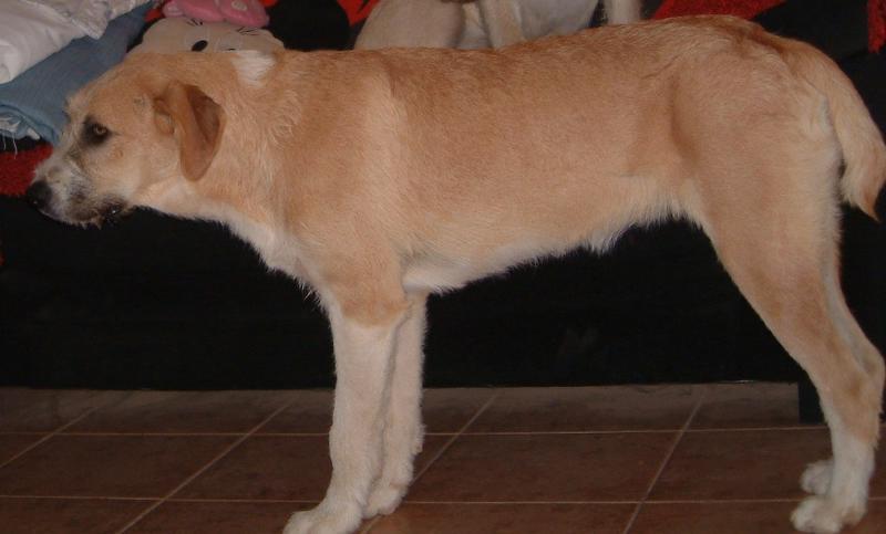 Bildertagebuch - Gemma, kleines Hundemädchen mit großen Pfoten sucht Kuschelplatz auf Lebenszeit - VERMITTELT - 23431531qp