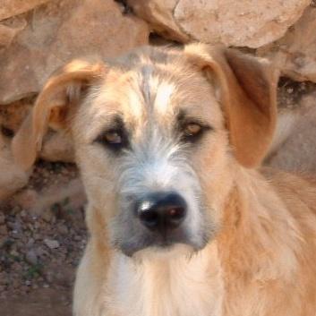 Bildertagebuch - Gemma, kleines Hundemädchen mit großen Pfoten sucht Kuschelplatz auf Lebenszeit - VERMITTELT - 23431532mj