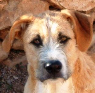Bildertagebuch - Gemma, kleines Hundemädchen mit großen Pfoten sucht Kuschelplatz auf Lebenszeit - VERMITTELT - 23431534ae