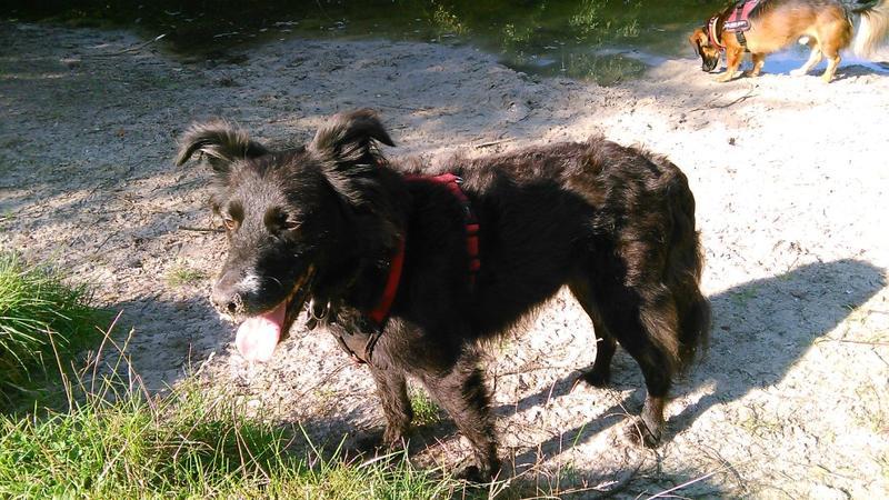 Sky, jetzt Finjo aus der Hundehölle Imola- VERMITTELT! 23445280gv