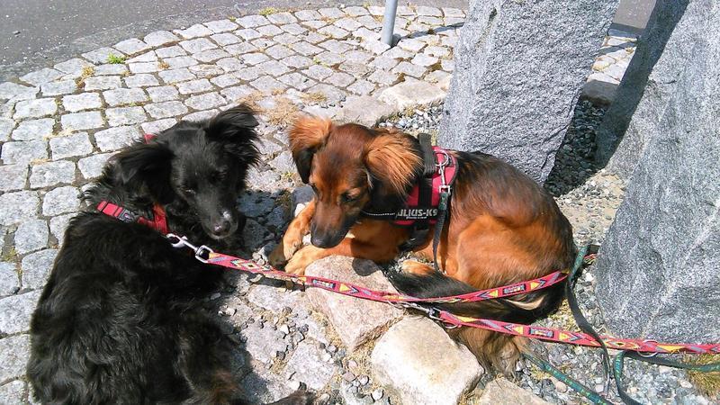 Sky, jetzt Finjo aus der Hundehölle Imola- VERMITTELT! 23445283np