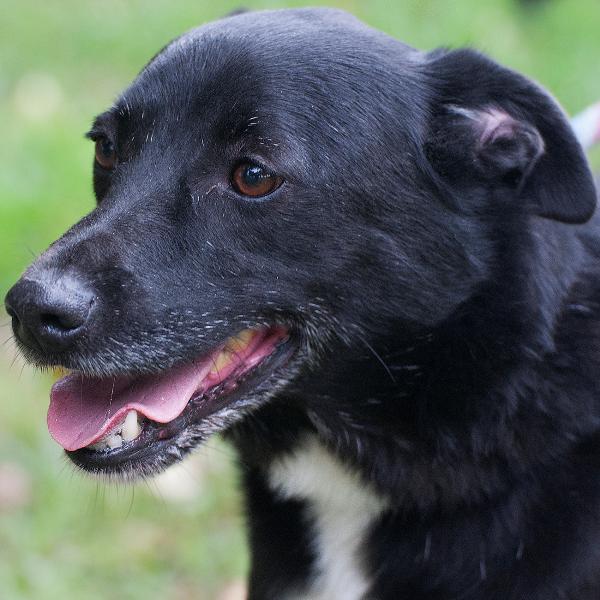 Bildertagebuch - Black Socks: echter Traumhund, der bisher viel Pech hatte! - wird über andere Orga vermittelt. 23524780zn