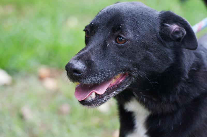 Bildertagebuch - Black Socks: echter Traumhund, der bisher viel Pech hatte! - wird über andere Orga vermittelt. 23524781jy