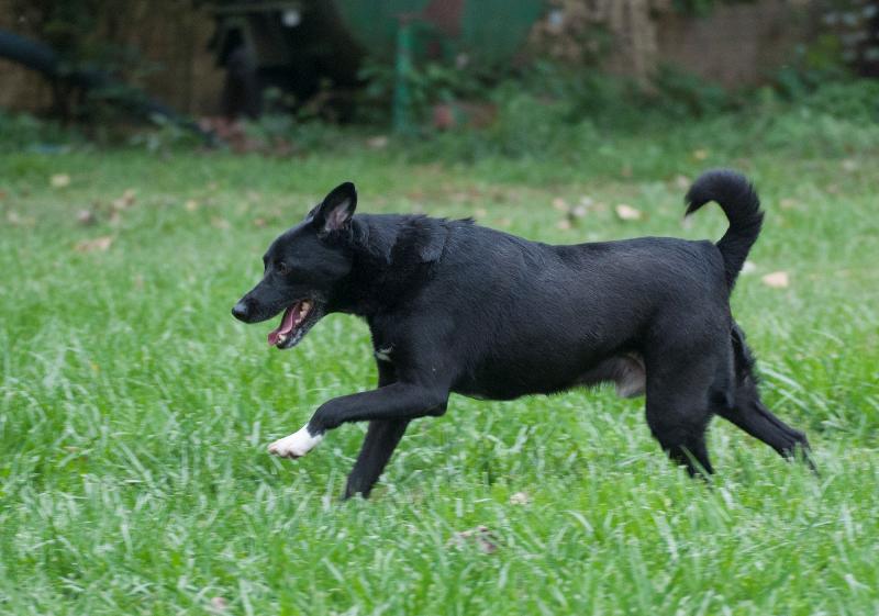 Bildertagebuch - Black Socks: echter Traumhund, der bisher viel Pech hatte! - wird über andere Orga vermittelt. 23524782qd